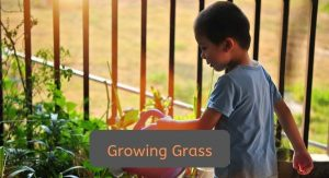 growing-grass